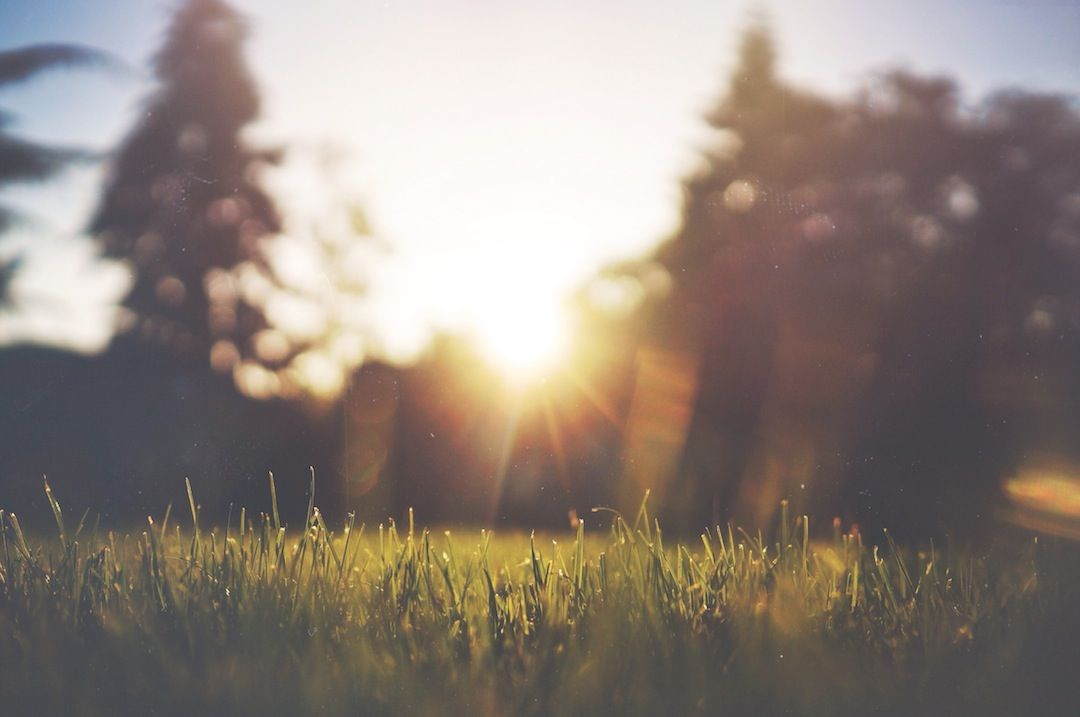 Close up shot of grass with the sun in the background